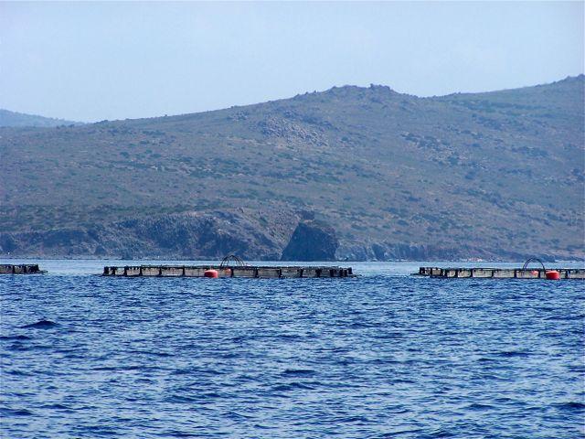 visboerderij