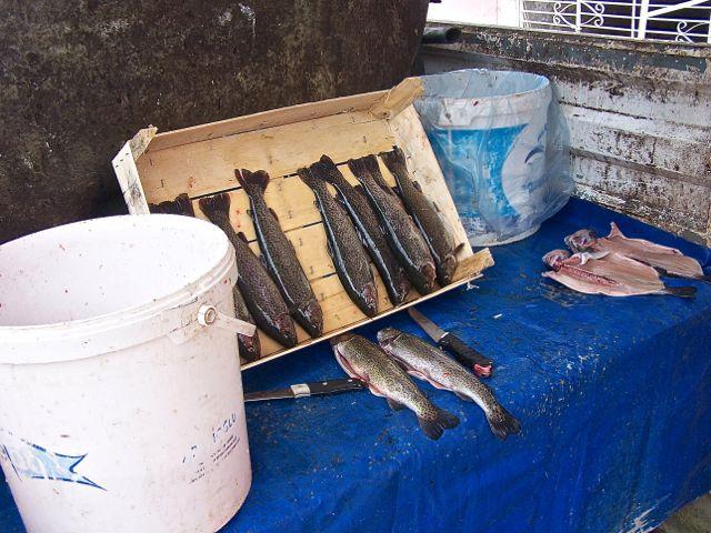 De vis wordt niet zo heel duur verkocht