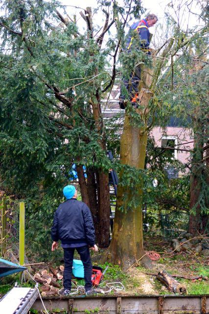 Bomen rooien bij buurvrouw aan de andere kant van de sloot