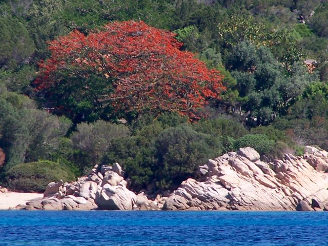 Een rooie boom