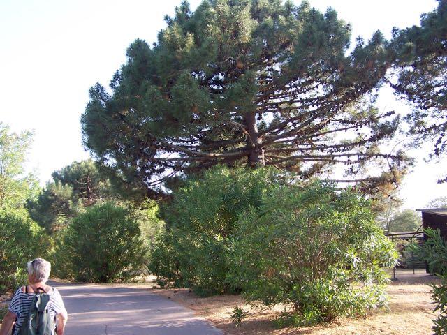 Fraaie bomen