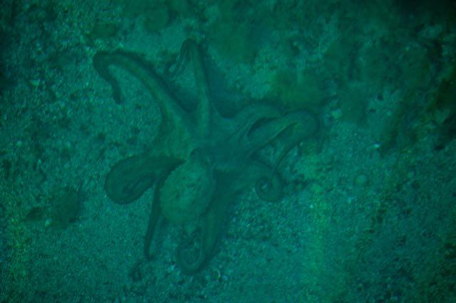 Oktopoessie 1