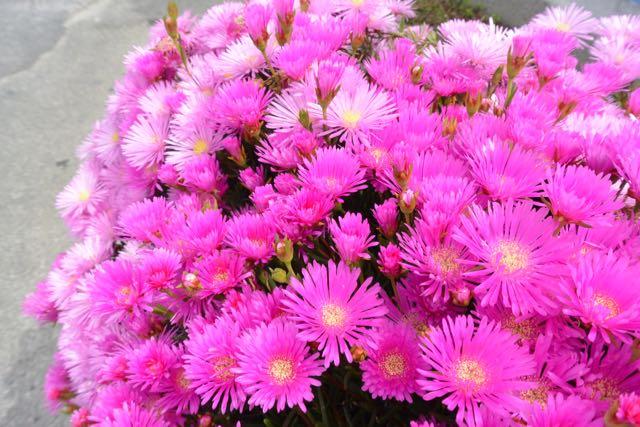 Mooi bloemetje onderweg gespot