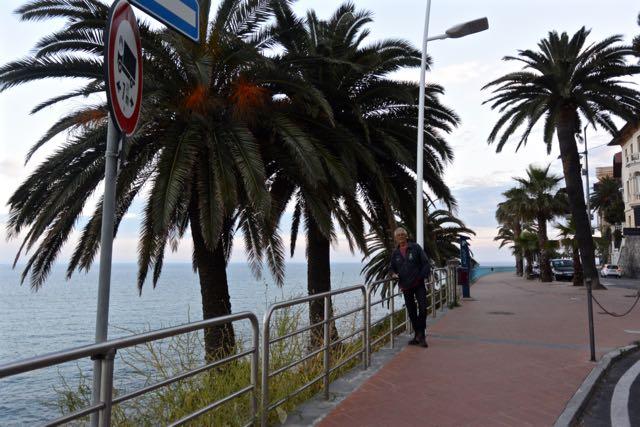 Mooie palmen