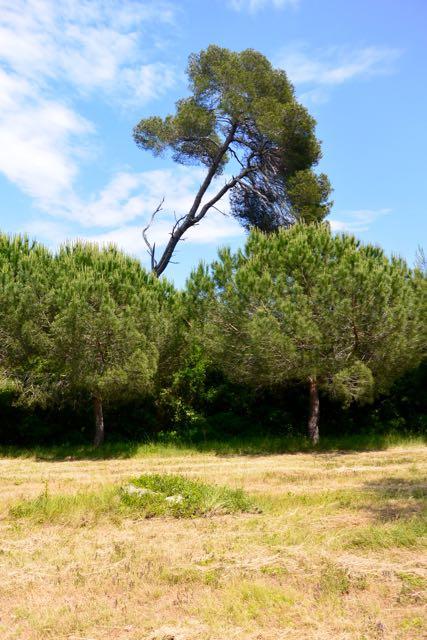 Veel bomen hier