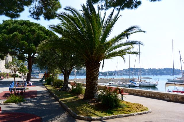 Palmen aan de haven