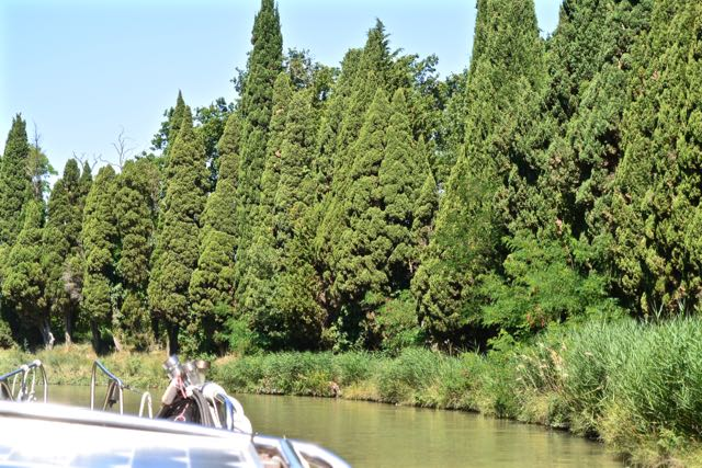 Mooie coniferen